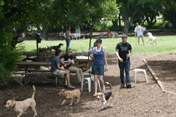 dog park in austin, texas